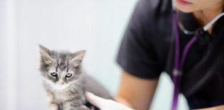Portare gatto dal Veterinario