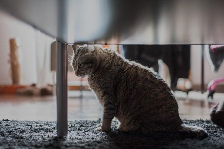 Sala d'attesa Gatti
